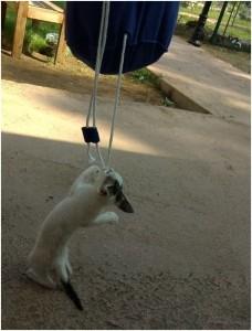 Blog_SOPHIST Sommerreise_Katze